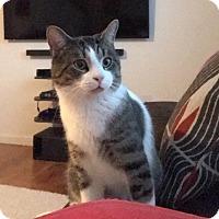Adopt A Pet :: Scooter - Carlisle, PA