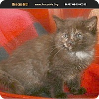 Adopt A Pet :: Rowena loves dogs & kids - Madison, TN