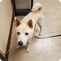 Adopt A Pet :: Furui Mozesu - New Braunfels, TX