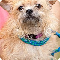 Adopt A Pet :: cinnamon - Johnson City, TN