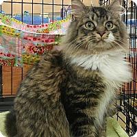 Adopt A Pet :: XANDER - Powder Springs, GA