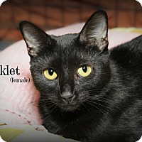 Adopt A Pet :: Chicklet - Glen Mills, PA