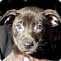 Adopt A Pet :: Baby Yule - Oakley, CA