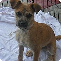 Adopt A Pet :: Holmes - Anaheim, CA