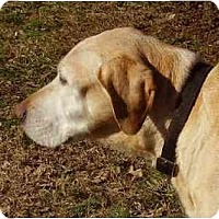 Adopt A Pet :: Victor - Cape Girardeau, MO