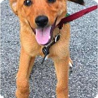 Adopt A Pet :: Harriet - in Maine! - kennebunkport, ME