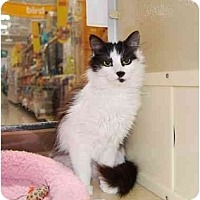 Adopt A Pet :: Sweet Pea - Modesto, CA