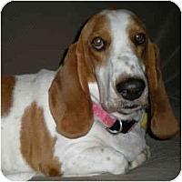 Adopt A Pet :: Michelle - Phoenix, AZ