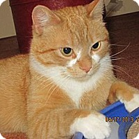 Adopt A Pet :: Cheddar - Jeffersonville, IN