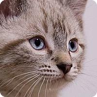 Adopt A Pet :: Teague - Chicago, IL