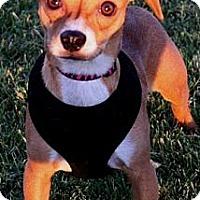 Adopt A Pet :: Zetta - Gilbert, AZ