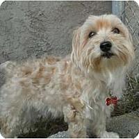 Adopt A Pet :: FL Chloe - Gulfport, FL