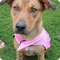 Adopt A Pet :: Pollyanna - Austin, TX