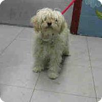 Adopt A Pet :: Smidge - Simi Valley, CA