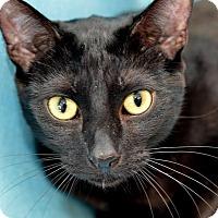Adopt A Pet :: ET - Oviedo, FL