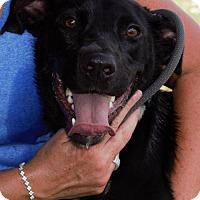 Adopt A Pet :: Theia - Choudrant, LA