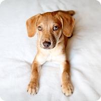 Adopt A Pet :: Fitzgerald - Austin, TX