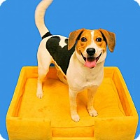 Adopt A Pet :: 1510-0510 Mr. Banks - Virginia Beach, VA