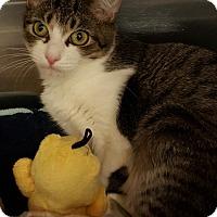 Adopt A Pet :: Tangle - Duluth, GA