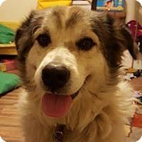 Adopt A Pet :: Mollie - Kyle, TX