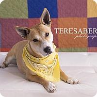 Adopt A Pet :: Suzy - McKinney, TX