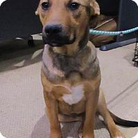 Adopt A Pet :: Sofie - 1 year old - Charleston, SC