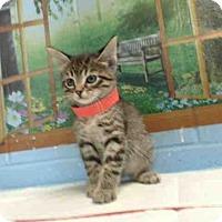 Adopt A Pet :: A492944 - San Bernardino, CA