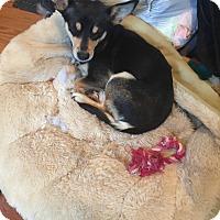 Adopt A Pet :: Dalilah - Jasper, TN