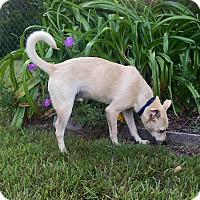 Adopt A Pet :: Casper (fostered in NC) - Cranston, RI