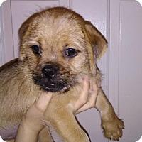 Adopt A Pet :: Rickon - Orlando, FL