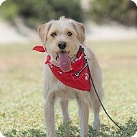 Adopt A Pet :: Robbie - San Diego, CA