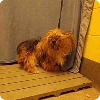 Adopt A Pet :: *JET - Upper Marlboro, MD