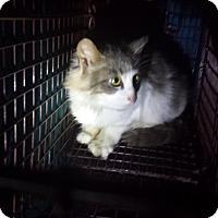 Adopt A Pet :: Wendylyn - Stafford, VA