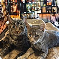 Adopt A Pet :: Bobbie - Horsham, PA