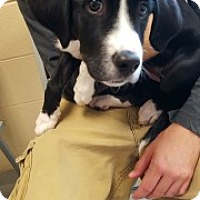 Adopt A Pet :: Mona 110493 - Joplin, MO