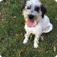 Adopt A Pet :: Charlie - Weatherford, TX