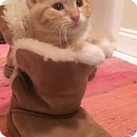 Adopt A Pet :: Asha - St Paul, MN