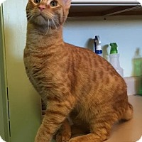 Adopt A Pet :: Cisco - The Dalles, OR