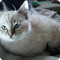 Adopt A Pet :: Sam C1550 - Shakopee, MN