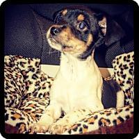 Adopt A Pet :: Snickers - Grand Bay, AL