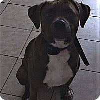 Adopt A Pet :: DEXTER - bath, ME