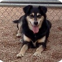 Adopt A Pet :: Moon Dog - Wheat Ridge, CO