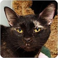 Adopt A Pet :: Leslie Winkle - Los Angeles, CA