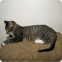 Adopt A Pet :: Mohawk - Modesto, CA