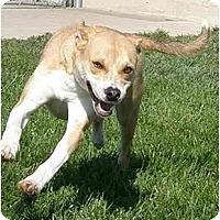 Adopt A Pet :: Tigra - Meridian, ID