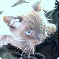 Adopt A Pet :: Primo - Davis, CA