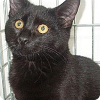 Adopt A Pet :: Onyx - Germansville, PA