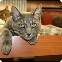 Adopt A Pet :: Rupert - Bonita Springs, FL