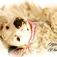 Adopt A Pet :: Vacation - Gilbert, AZ