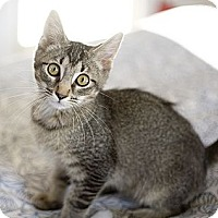 Adopt A Pet :: Fuzzy - Chicago, IL